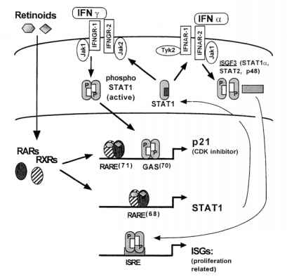 Images Retinoid Mechanism Action