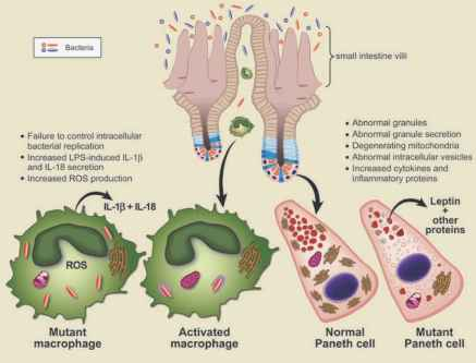 an analysis of the causes and symptoms of crohns disease in patients