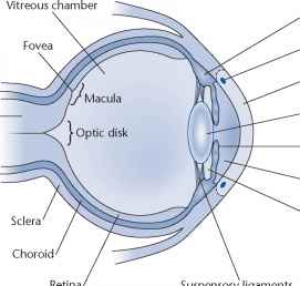 Figure Structure The Eye