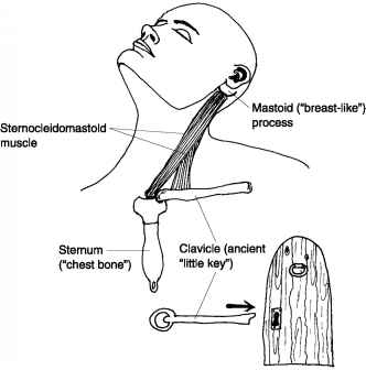 Sternocleidomastoid And Alcohol