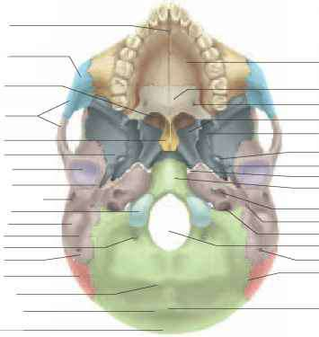 Mastoid Notch
