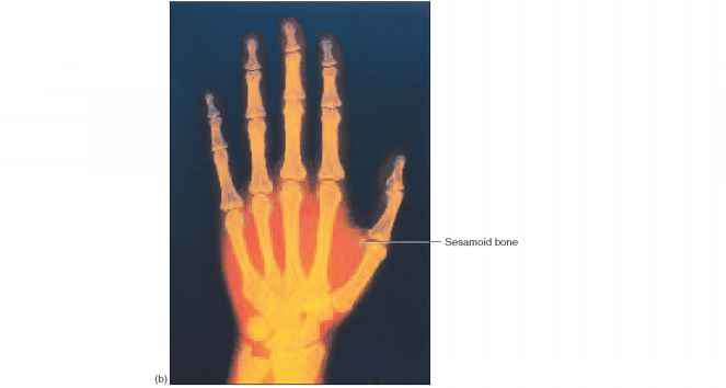 Palmar Anterior Surface Right Hand