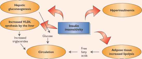 Insulin Cholesterol Relationship