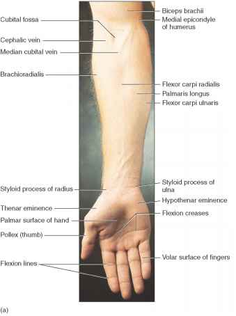 Lateral Aspect Hand