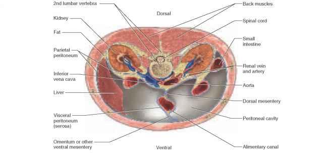 Organ Systems - Physiology - AmeriCorps Health Blog